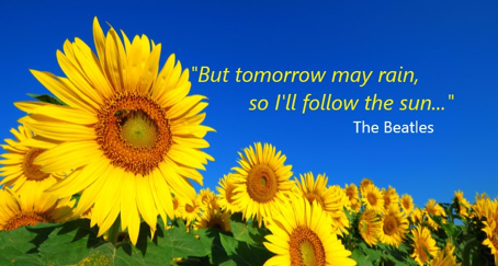 Do people follow you like sunflower follow the sun?